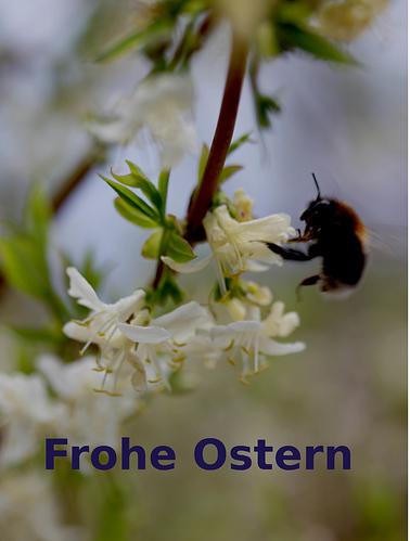 ostern_hummel